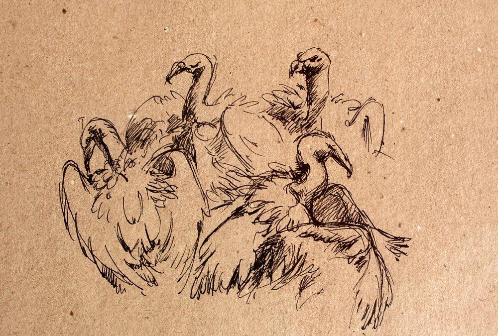 vautours2b