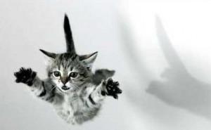 cat-invisible-parachute.jpg