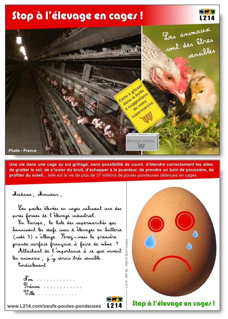 carte-poules-pondeuses-supermarche-800x1118.jpg