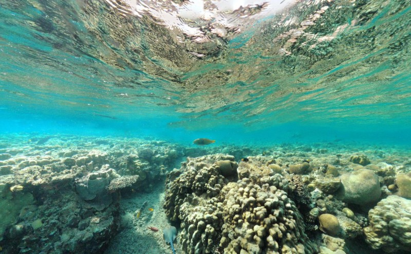 plongée mer  rouge.jpg