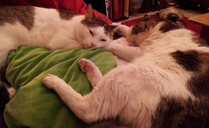 chats,chats libres