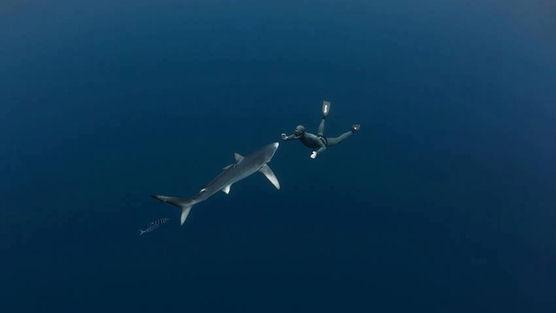 requin homme