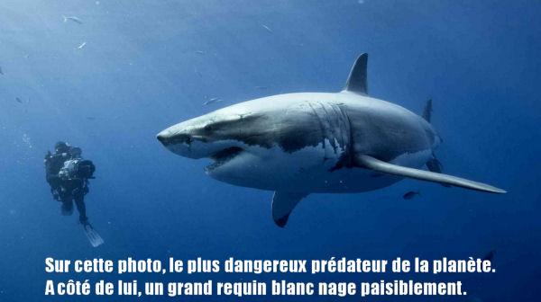homme requin b