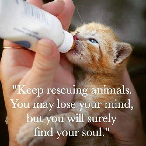 sauver des animaux