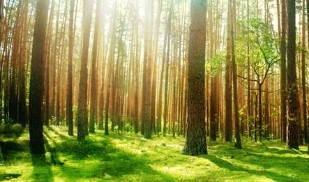 JPG couv arbres